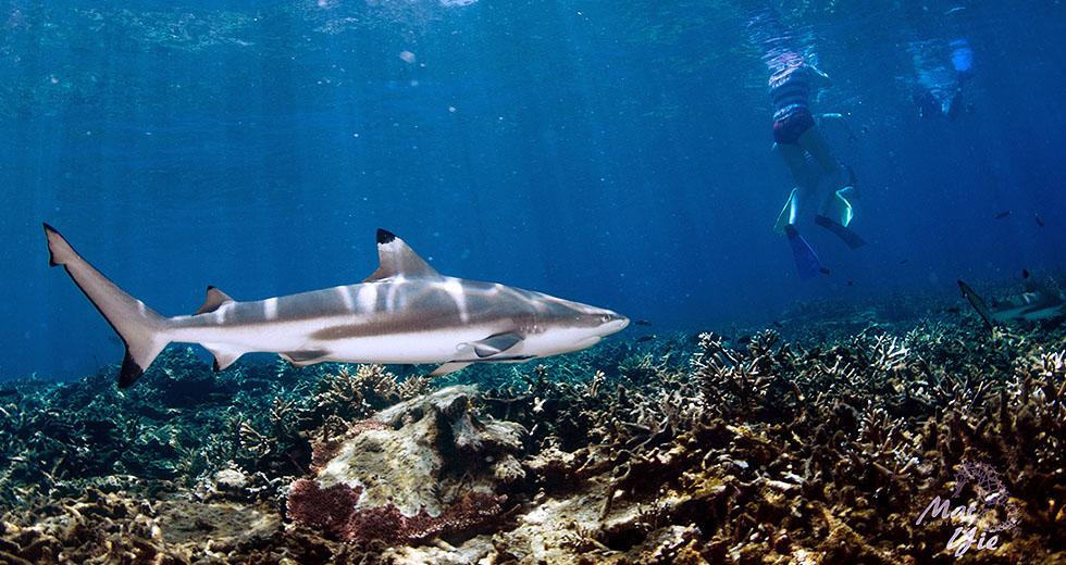 Dive Pulau Perhentian