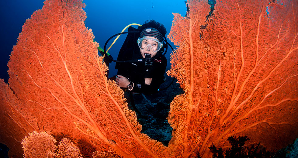 Dive Pulau Weh